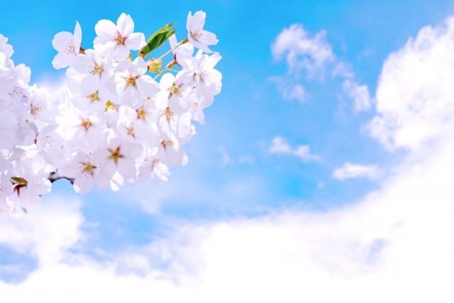 お花見 風習
